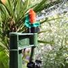Picture of 50-Ft Micro Sprinkler Starter Kit